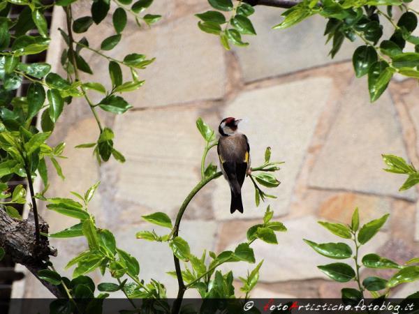 Uccello su ramo